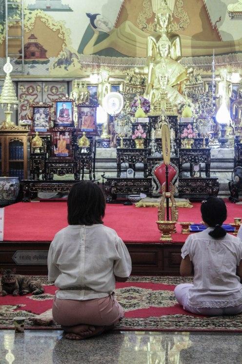 Cat's Prayers, Golden Buddha, BKK