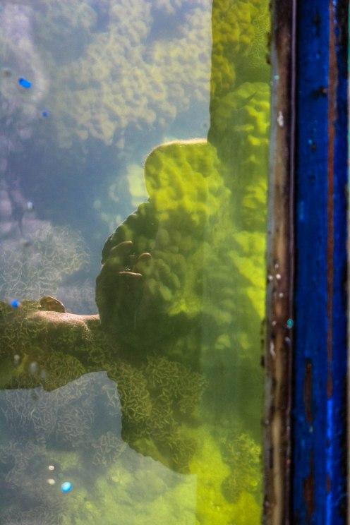 coral-dreams-ko-sak_-2