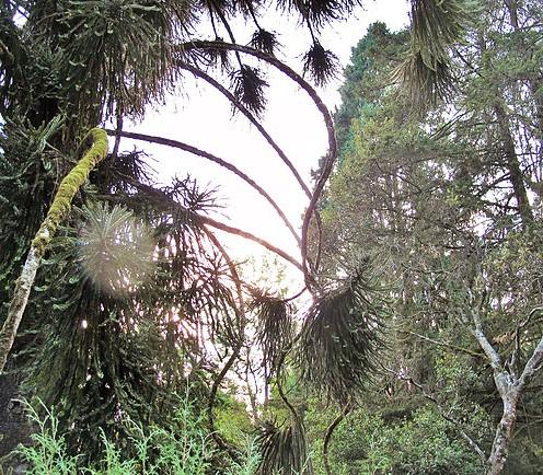 Evergreen, Ooty 4