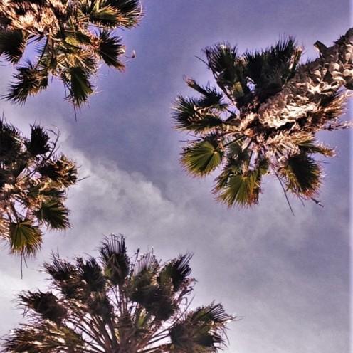 Hazy, Venice Beach, CA