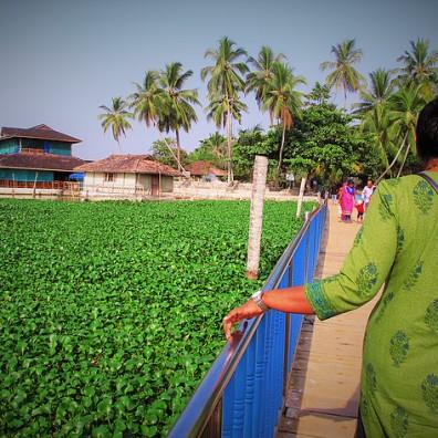 India mama, trivandrum