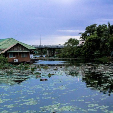 lilies-ban-tai-thailand-copy