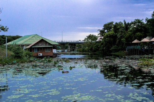 lilies-ban-tai-thailand