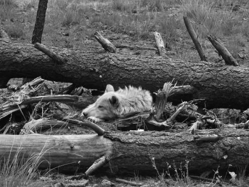 Log Slumber