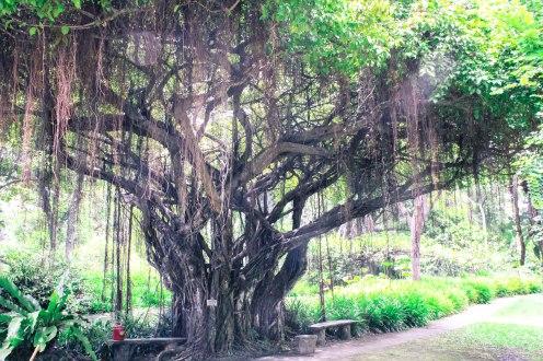 lovely-vines-buddhamonthon-copy
