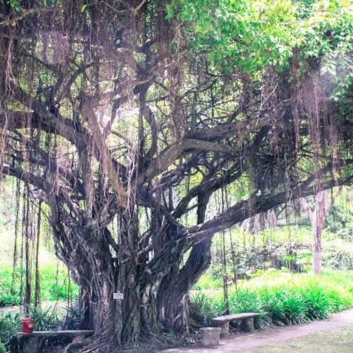 lovely-vines-buddhamonthon