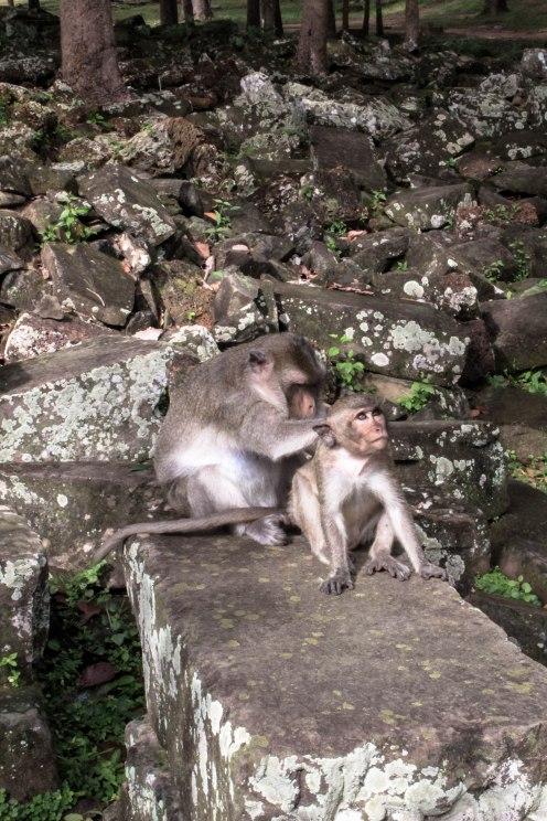 monkey-love-angkor-wat_