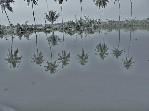 Palm Jungle 2