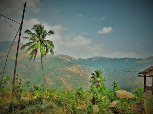 Telephone Wires, Munnar