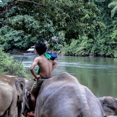 the-herd-lom-som-kanchanaburi-copy