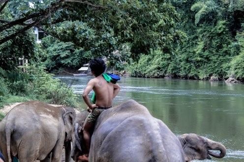 the-herd-lom-som-kanchanaburi-copy