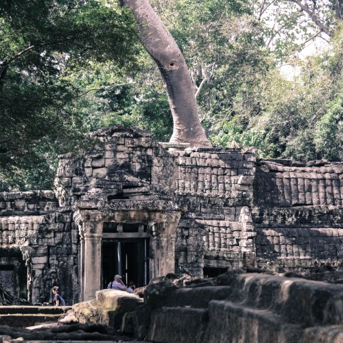 tree-in-a-temple-angkor-wat
