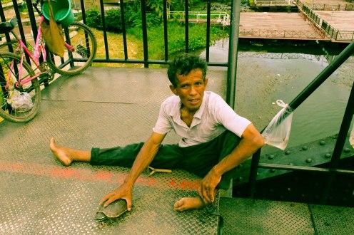turtle-som-lom-thailand-2