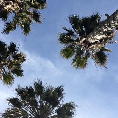 BirthdayTreez, Venice Beach, CA