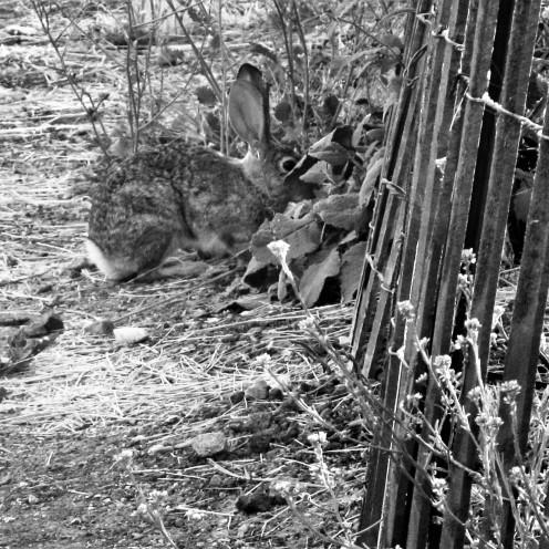 bunnyfoofoo, LIB, Bradley, CA