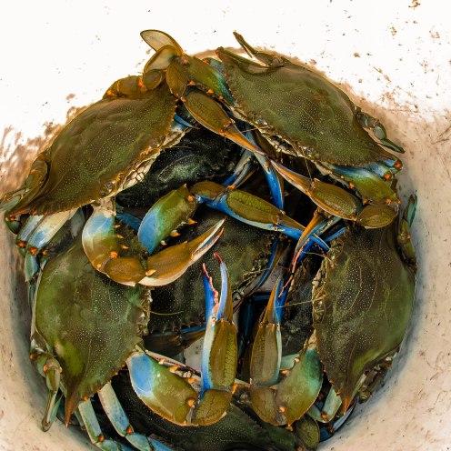 Crabz, OC, MD