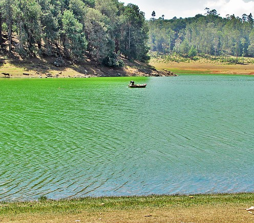 Green Lake, Oozy
