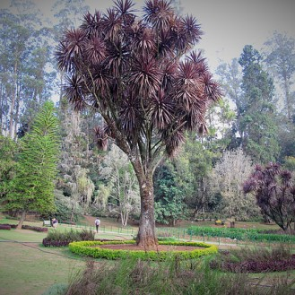Truffle Trees, Oozy