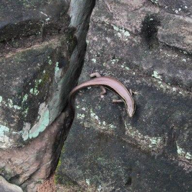 metallic-lizard-angkor-wat-cambodia