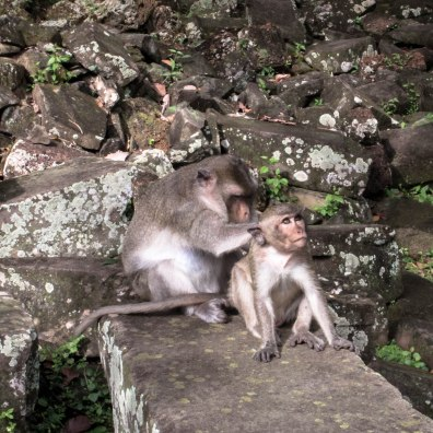monkey-love-angkor-wat_
