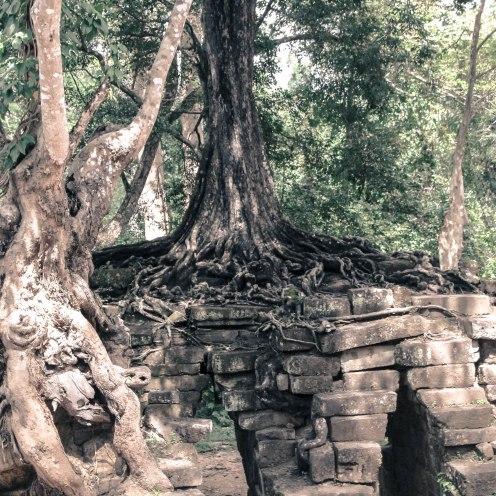tree-temple-angkor-wat